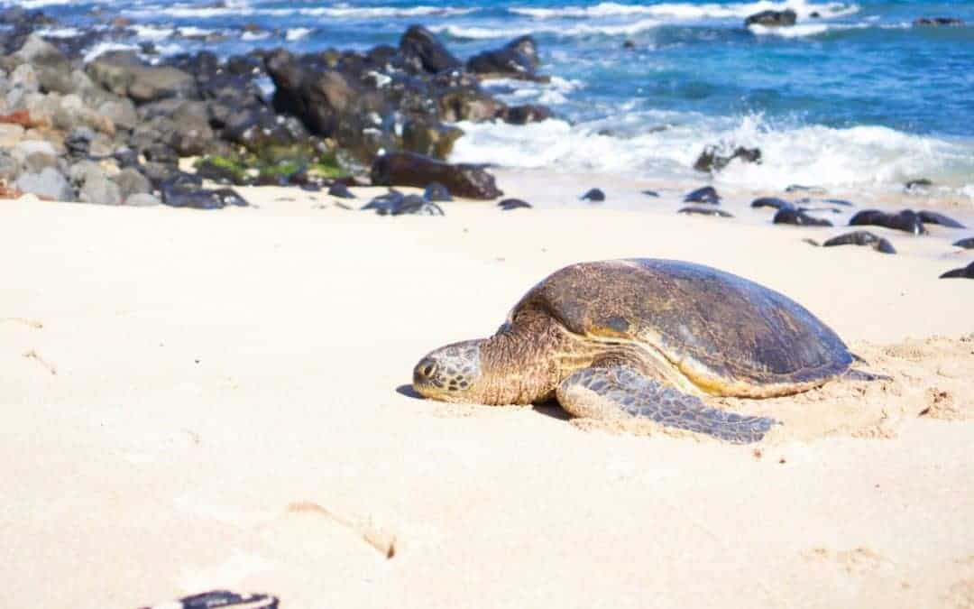 The 14 Best Things to Do on Maui on a Budget