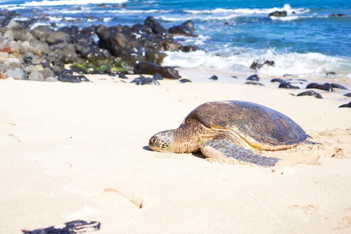 things to do on maui on a budget