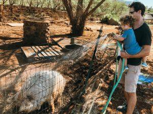 Maui Animal Farm Things to Do Maui Kids