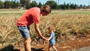 Maui Pineapple Farm Tour Kids Activities
