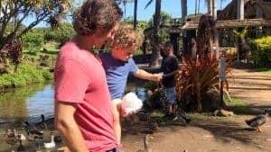 Maui Tropical Plantation Kids Activities