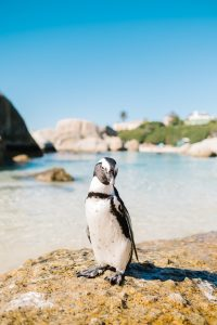 Penguin Feed Hyatt Maui Things to Do With Kids