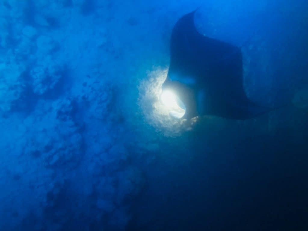 Manta Ray Night Snorkel Adventure