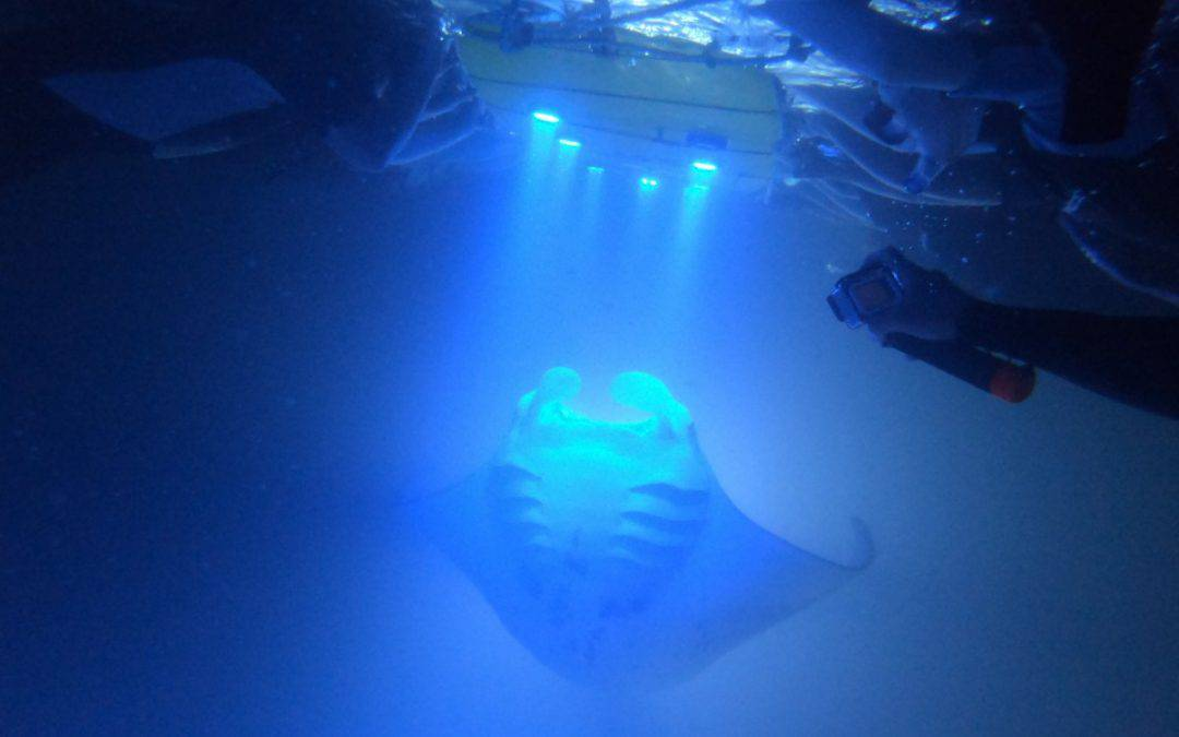 Manta Ray Night Snorkeling Guide: What to Expect (a thrill)