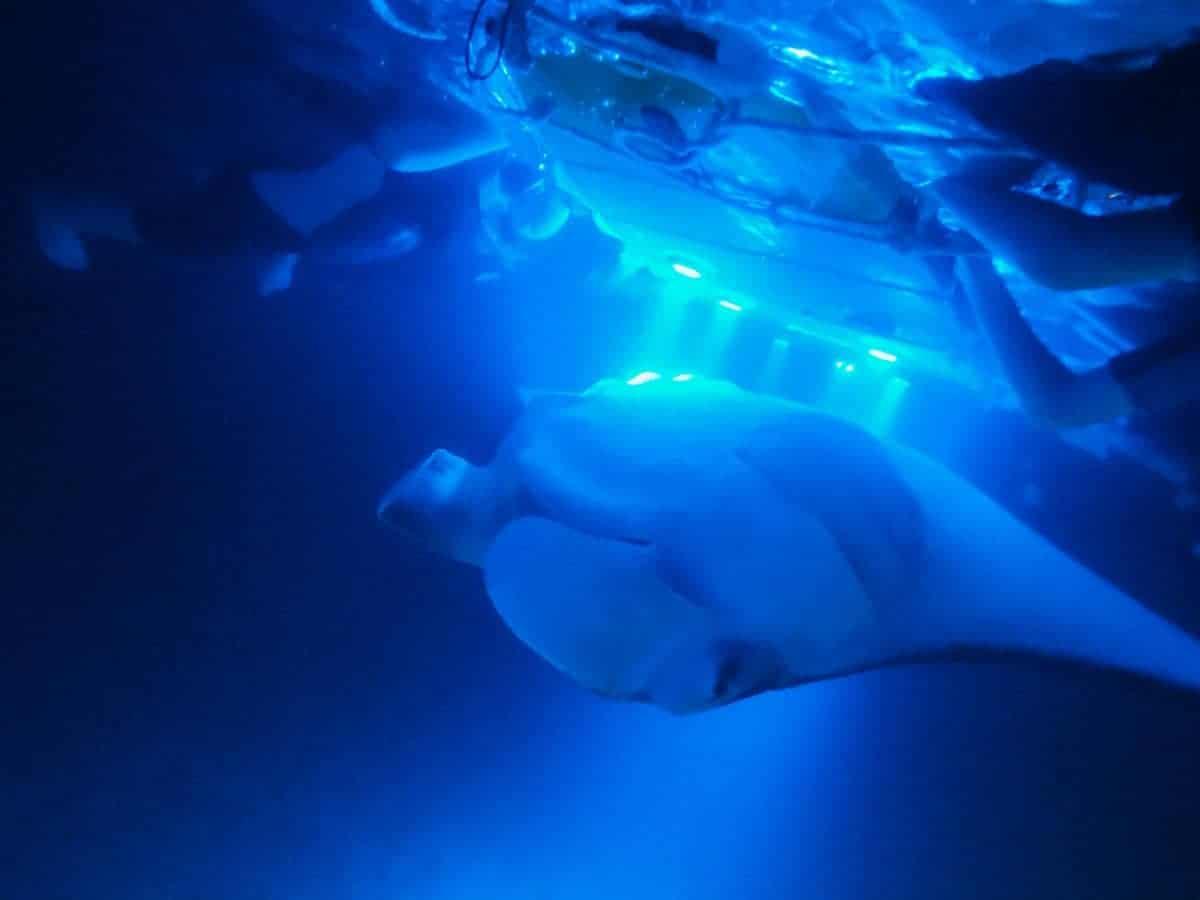 Manta Ray Night Snorkel Kona