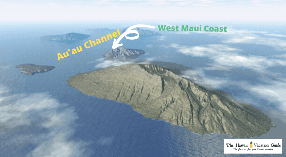 Maui Whale Watching 3D Map