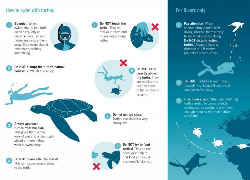 Turtles-Snorkeling-Code-of-Conduct