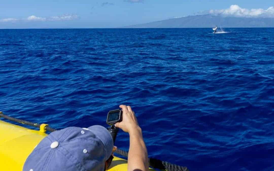 Whale Watching Maui: The Guide to Seeing Humpback Whales