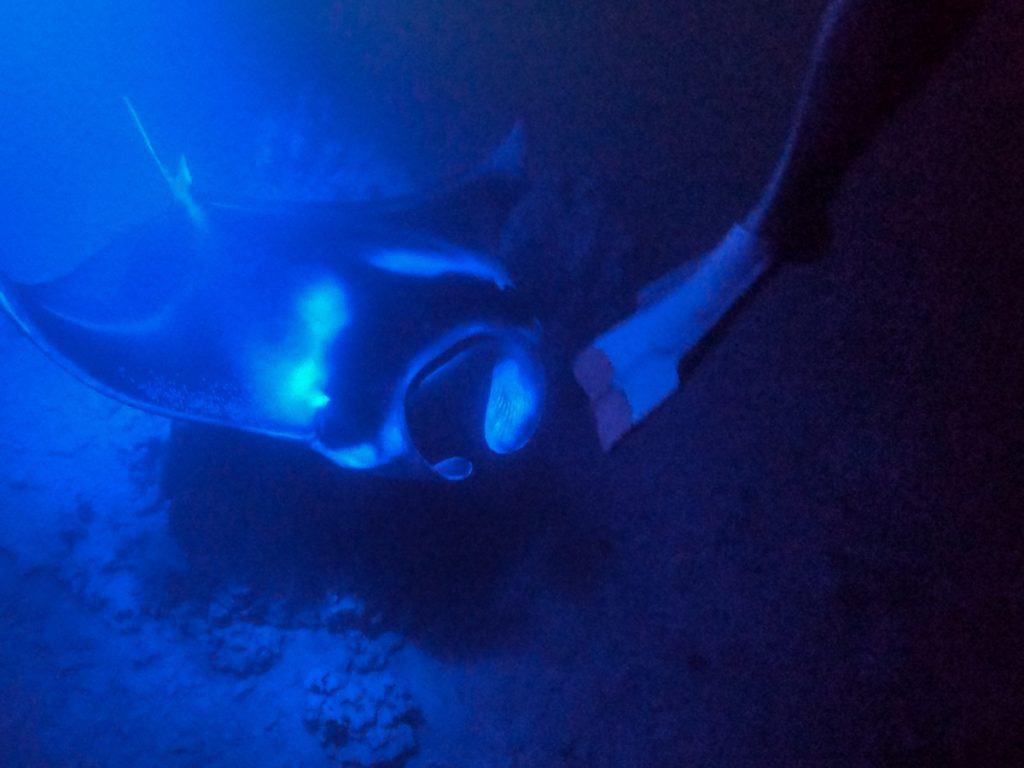 manta ray snorkel Hawaii