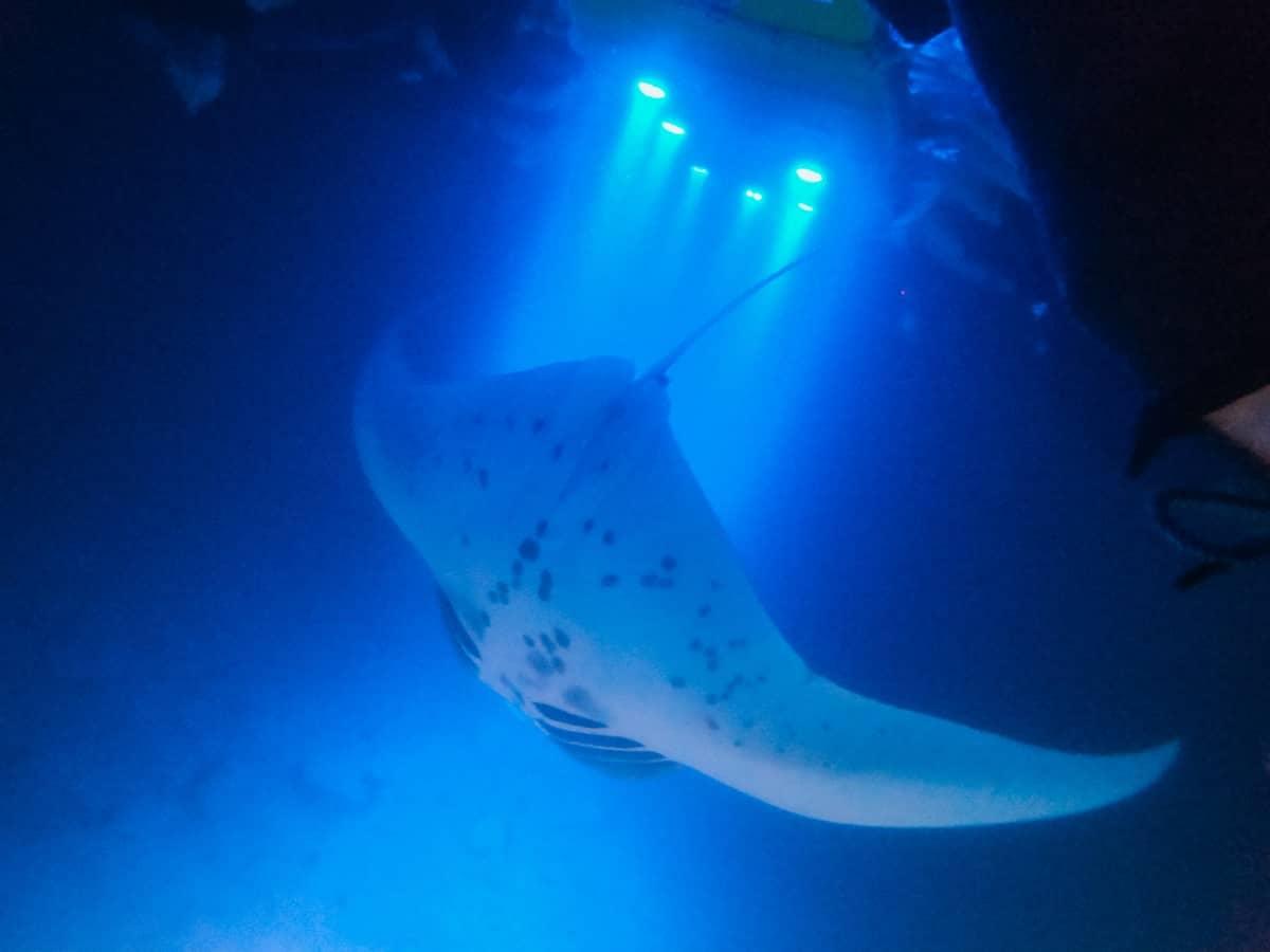 night manta ray adventure
