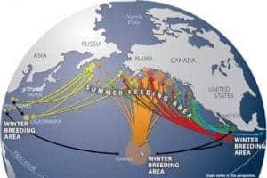 splash_data_map_humpback_migration_map