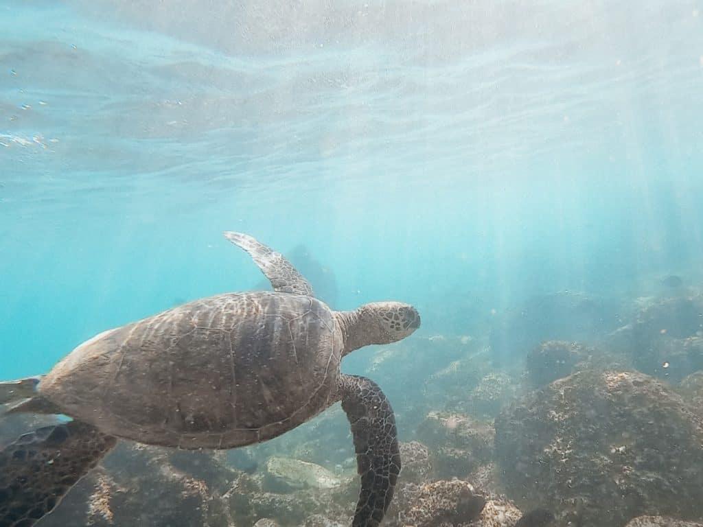 Best Snorkeling in Hawaii in May is Kauai