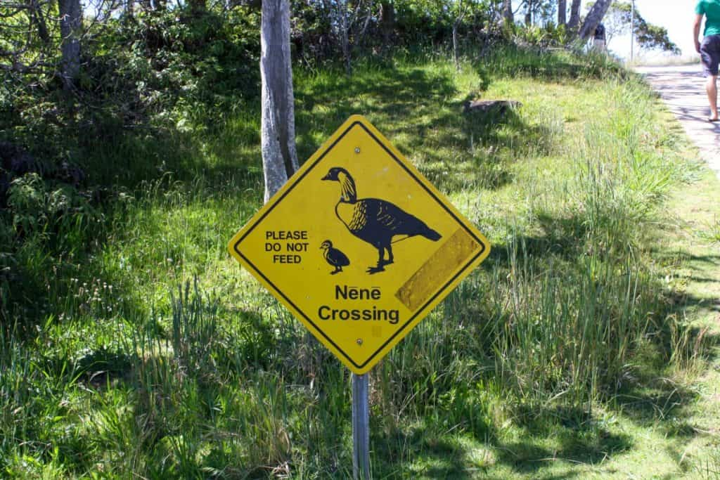 Nene Crossing Hawaii itinerary