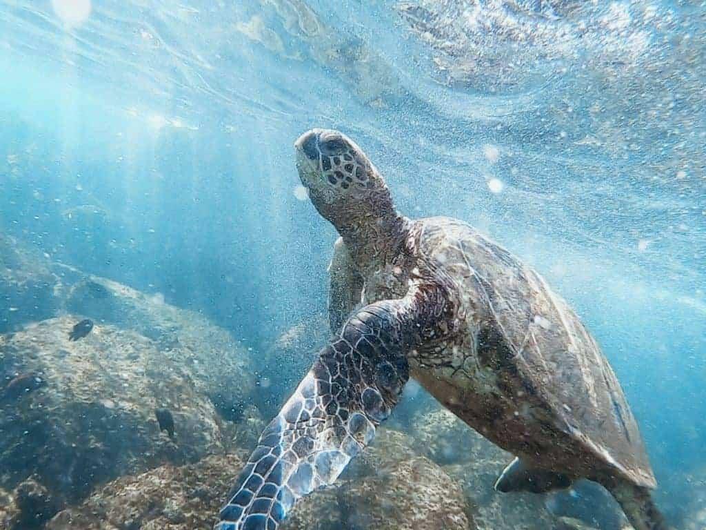 Turtle Tours Oahu Go Card