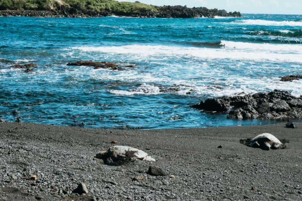black sand beach sea turtles things to do outdoors hawaii