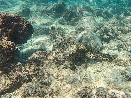 Kikaua Beach best beach kailua-kona hawaii sea turtle snorkeling