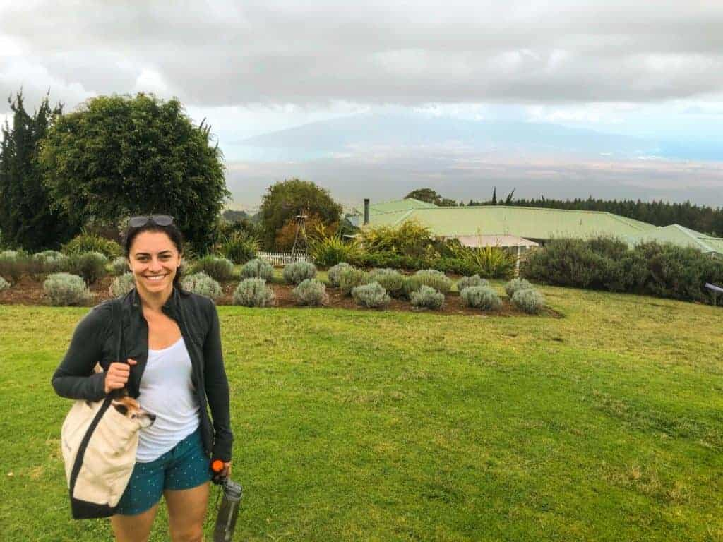 Maui Honeymoon Itinerary Lavender Farm Kula