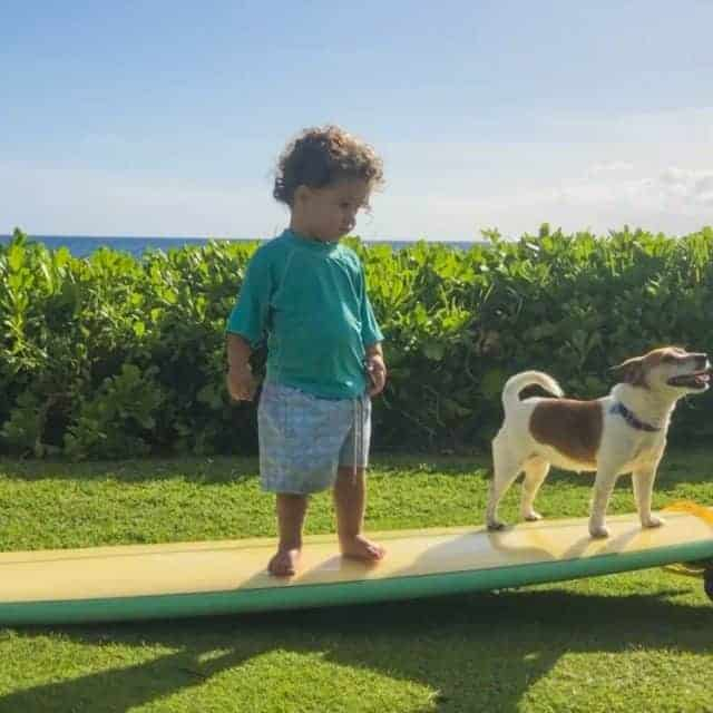 Can You Bring Your Dog to Hawaii? This is How to Avoid Pet Quarantine