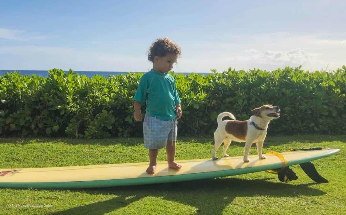 can you bring your dog to Hawaii