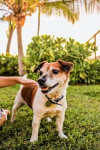 our dog in Hawaii bring your dog to Hawaii