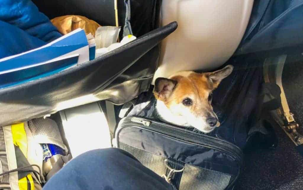 what airlines allow pets in cabin Alaska Airlines Hawaiian Airlines