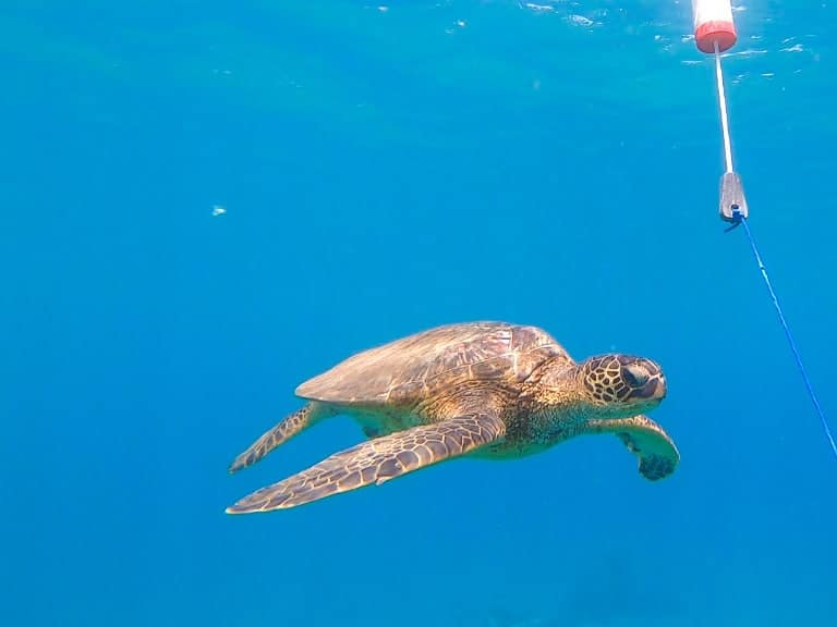 The 5 Best Snorkeling Places on Maui