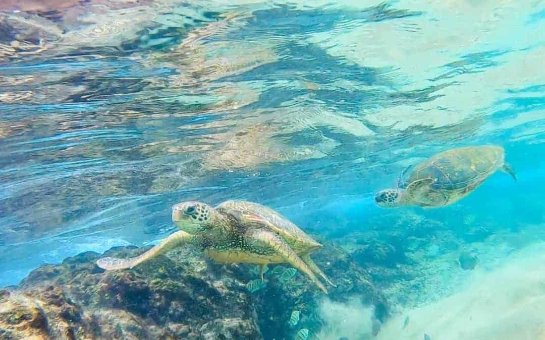 5 Best Snorkeling Spots on Maui Hawaii