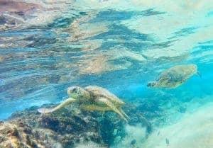 Black Rock best snorkeling maui