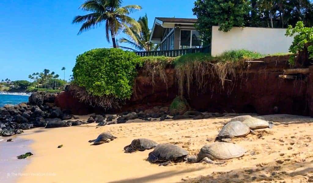 which hawaiian island to visit Maui sea turtles