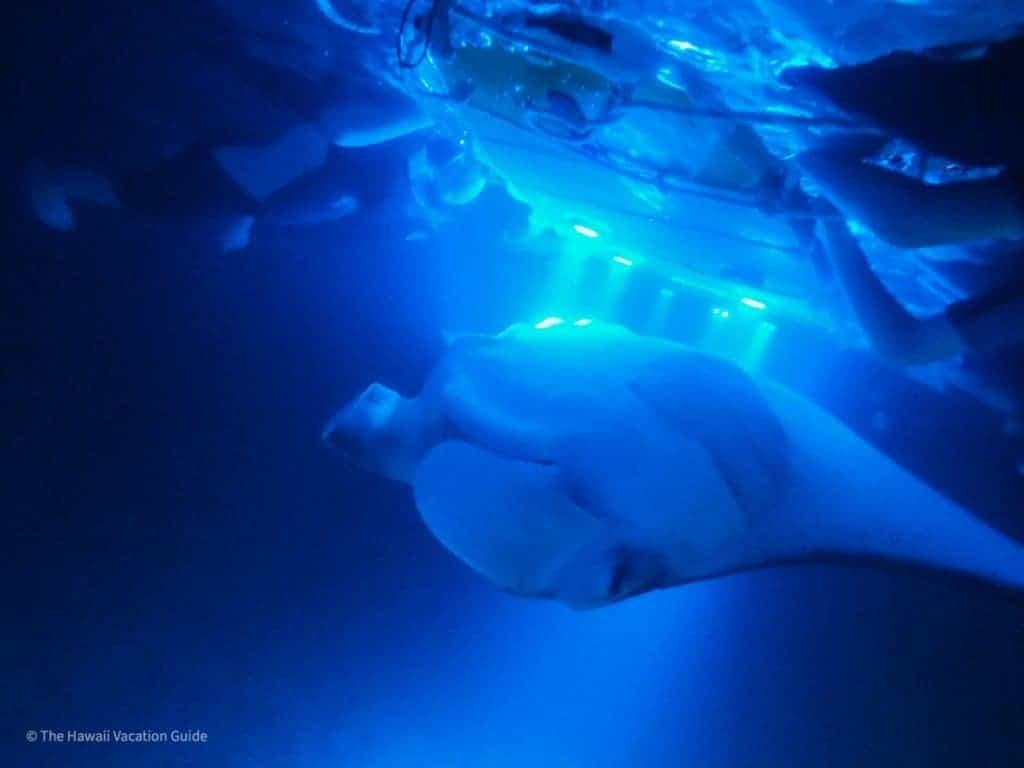 which hawaiian island to visit big island manta ray snorkeling