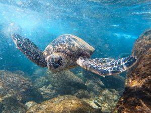 Oahu Travel Guide Trip Planning Hawaii