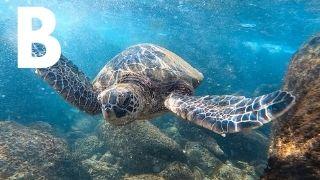 Hawaiian island to visit quiz Maui Hawaii
