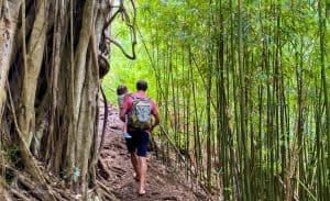 easy hikes oahu Hawaii Judd Trail