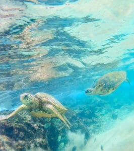 Best Hawaii Itineraries Hawaii Vacation Guides 2