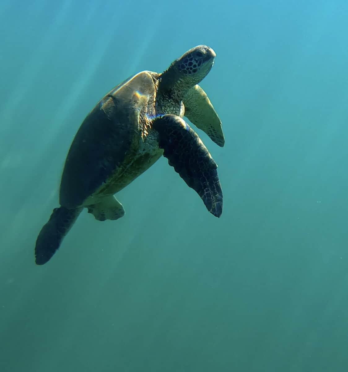 Best Snorkeling Maui Mala Wharf