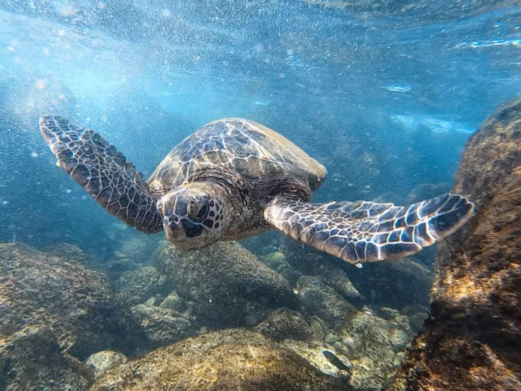 Maui vs Kauai snorkeling