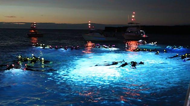 manta night snorkel kona ocean adventures