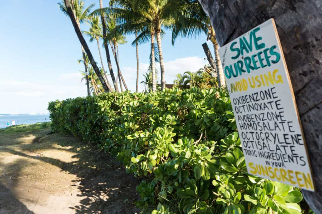 where to see sea turtles maui reef safe sunscreen
