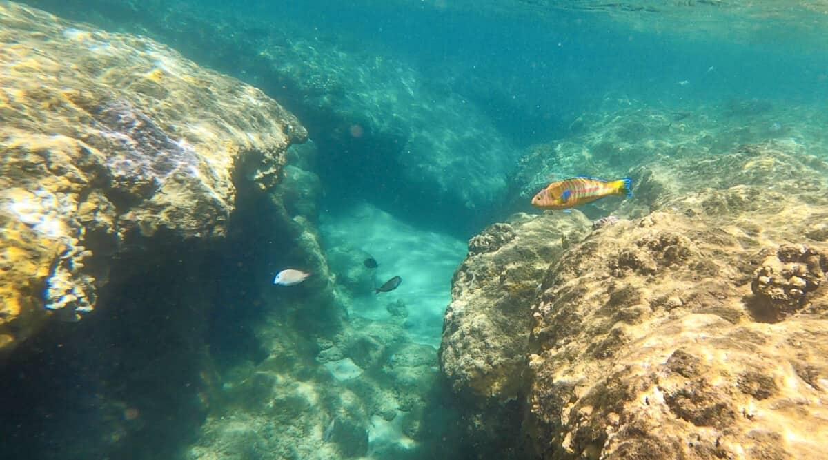 Best snorkeling Kauai Ke'e Beach