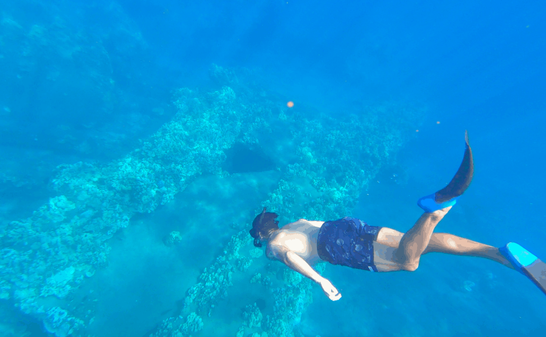 The 9 Best Snorkeling Spots in Lahaina and West Maui