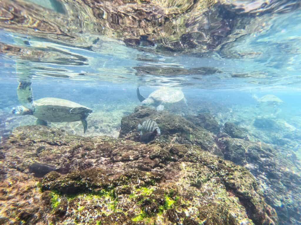Best snorkeling Lahaina Black Rock