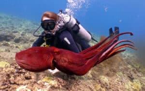Boat Reef Dive Oahu Waikiki Banzai Divers Hawaii