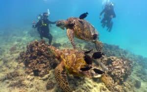 Hawaii Oahu Reef scuba dive tour