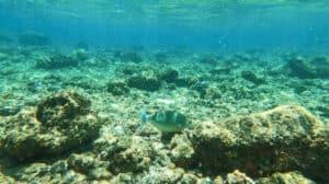 Best Snorkeling Spots Kauai