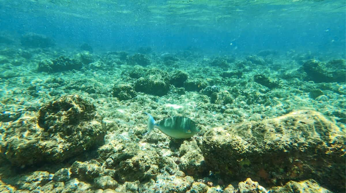 Don't Miss the 5 Best Snorkeling Spots on Kauai (with maps, directions, and tips)
