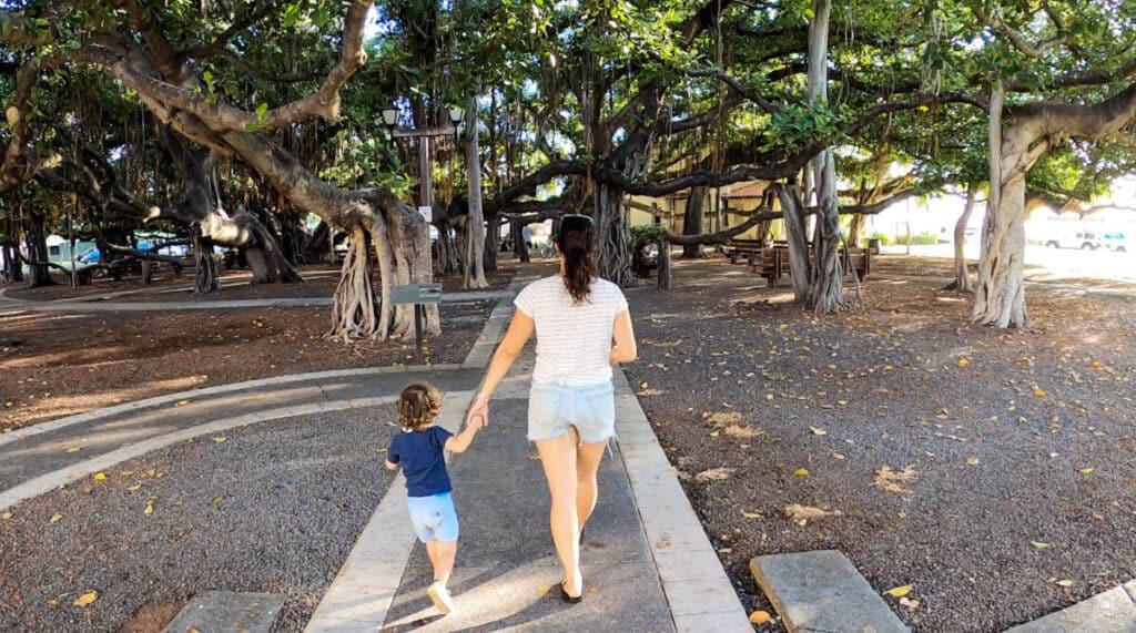 Lahaina things to do activities banyan tree