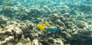 Maui for Couples Lanai Snorkeling