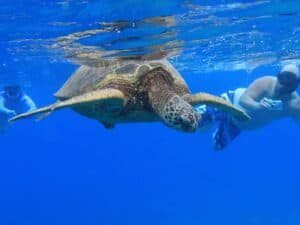Oahu Snorkel Tour Turtle and Dolphin