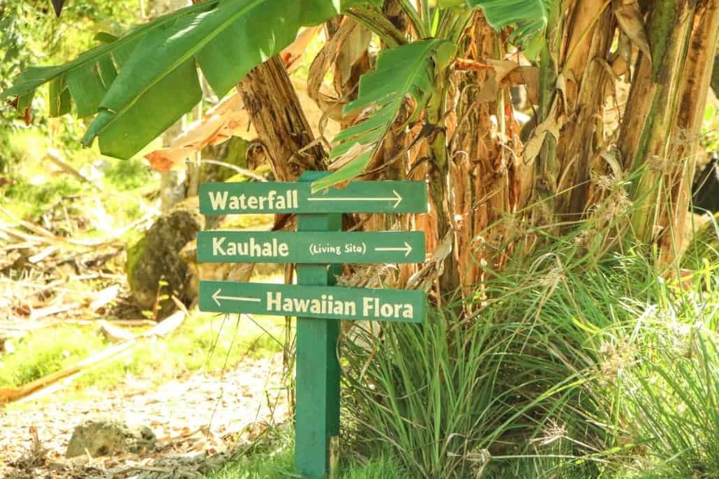 Waimea-Valley-Oahu-Hawaii-Circle-Island-Tour