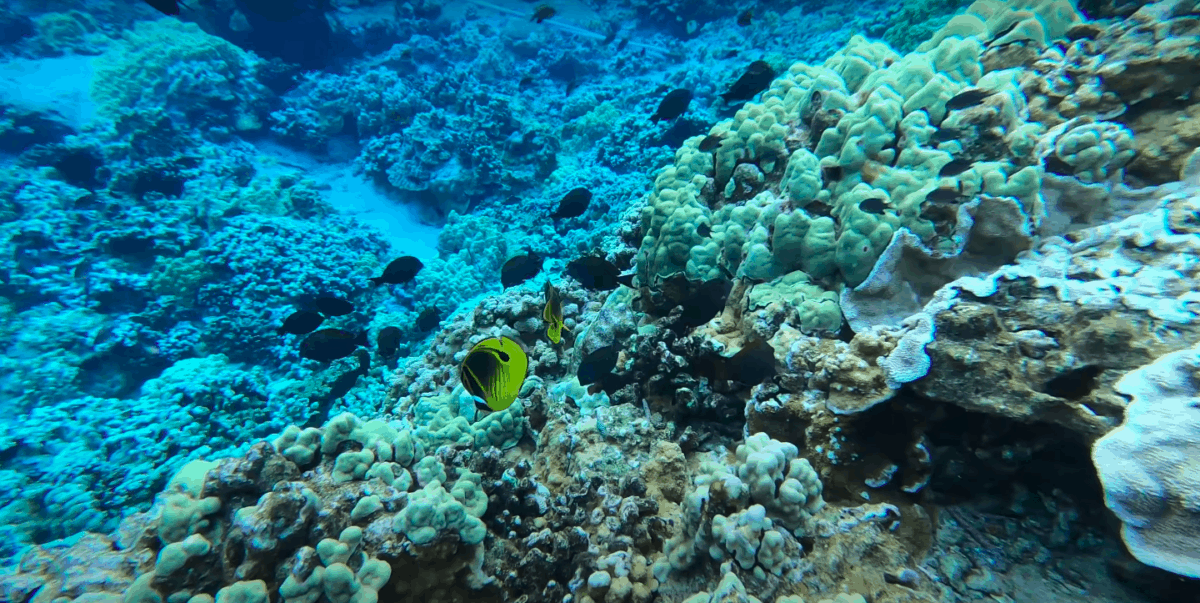 Which Hawaiian Island Has the Best Beaches Snorkeling